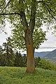Linden Pinzagen Brixen Tafel.jpg