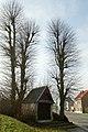 Linden bij de St-Annakapel te zwalm - 372636 - onroerenderfgoed.jpg