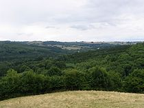 Lineover Woods - geograph.org.uk - 43919.jpg