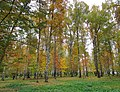 Lobnya, Moscow Oblast, Russia - panoramio (231).jpg