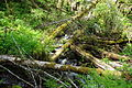 Logs near base of Ki-a-Kuts Falls.JPG