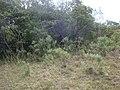 Loma 03 - panoramio.jpg