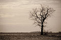 Lonely Tree in the Middle of a Field.jpg