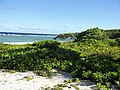 Long Beach - Tinian - panoramio (1).jpg