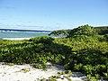 Long Beach - Tinian - panoramio (1).jpg