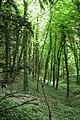 Looking down into Limekiln Copse - geograph.org.uk - 10722.jpg