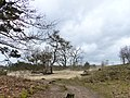 Loonse Duinen - panoramio.jpg