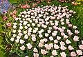 M^m Flores en el parque en la Haya - Creative Commons by gnuckx - panoramio (14).jpg