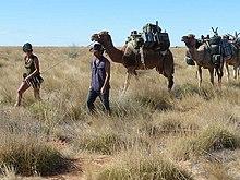Vie de chameau dans CHAMEAU - DROMADAIRE 220px-M%C3%A9har%C3%A9e_Simpson_d%C3%A9sert