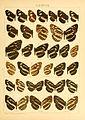 Macrolepidoptera01seitz 0113.jpg
