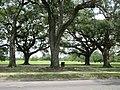 Magazine Street through Audubon Park, New Orleans, 29 June 2020 03.jpg