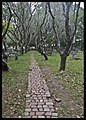 Malaysia Penang- Walkway to the Graves-1and (4509411294).jpg