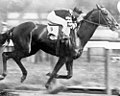 Man o' War winning the Belmont.jpg
