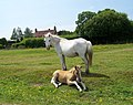 Mare and foal, North Gorley - geograph.org.uk - 868372.jpg