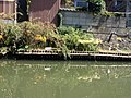 Matsue, Shimane Prefecture, Japan - panoramio.jpg