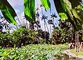 Mauritius.- Jardin botanique Sir Seewoosagur Ramgoolam (3).jpg