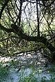 Maya Wendler - GPS 51.201643, 6.883316 - Naturschutzgebiet Unterbacher See (Eller Forst) 40627 Duesseldorf (13).jpg