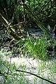Maya Wendler - GPS 51.201643, 6.883316 - Naturschutzgebiet Unterbacher See (Eller Forst) 40627 Duesseldorf (2).jpg