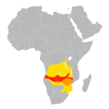 Merops nubicoides distribution map.png