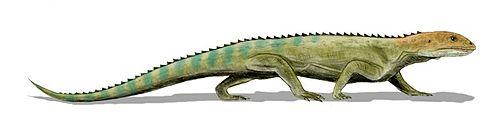Mesosuchus