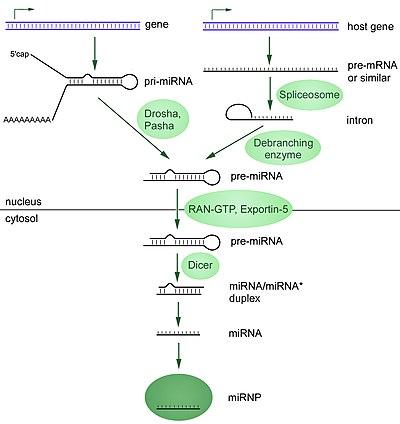 Biogenesis definition yahoo dating