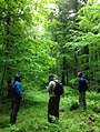 Miltary vets - Chequamegon-Nicolet National Forest.jpg