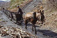 Mine charbon Palacios del Sil avril 1984-b.jpg