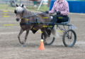 Miniature Horse Harness.png