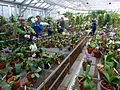 MoBot Orchid Greenhouse - Flickr - treegrow.jpg