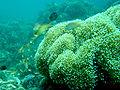 Moalboal Coral Reef.jpg
