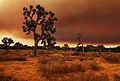 Mojave Desert Fire (3871694358).jpg