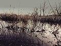 Mokradła - panoramio (4).jpg