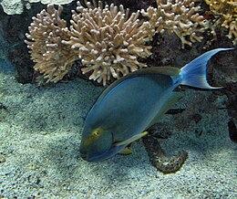 Monaco.Musée océanographique015