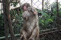 Monkey in the cage.jpg