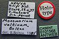 Monomorium hanneli casent0101568 profile 1.jpg