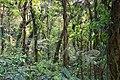 Monteverde Reserve Costa Rica 18.jpg
