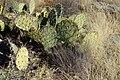 Montezuma Well - 37952565784.jpg