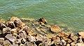 Monument afsluitdijk en omgeving 28-06-2019. (actm.) 28.jpg