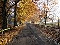 Mote Park, Maidstone - geograph.org.uk - 89366.jpg