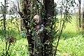 Muñeca vieja en árbol antiguo.JPG