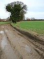 Muddy farm track - geograph.org.uk - 668229.jpg