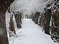 Muehlpfad in muehlhausen im winter.jpg