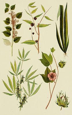 NIE 1905 Hemp - Fibre Plants.jpg