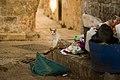 Nablus Street cat Victor Grigas 2011 -1-99.jpg