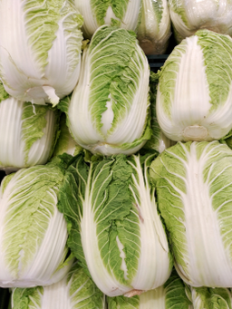 Napa cabbages