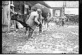 Narcyz Witczak-Witaczyński - Krycie krów w Rykach (107-673-2).jpg