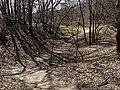 Nationaal Park Kennemerland (41369121071).jpg