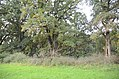 Naturdenkmal Huteanger Winkelhaid EDA 1815.jpg