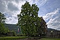 Naturdenkmal Zwei Alte Linden, Kennung 82350800009, Schloßruine, Wildberg 07.jpg