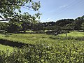 Nature Observation Pond in Suwa Park in Omuta, Fukuoka.jpg